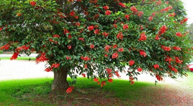 Almirante Brown: los 1000 árboles de la discordia