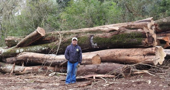 Misiones: Ecología suspende explotación del bosque nativo en Arroyo 9