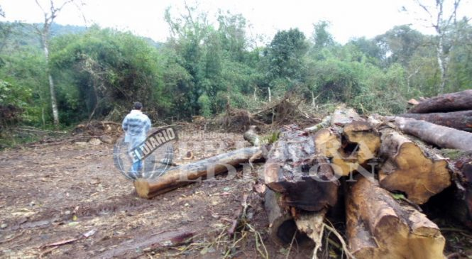 Misiones: La Justicia concretó inspección por tala en Arroyo 9