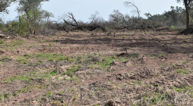 Chaco: Estafa ambiental y cambio climático