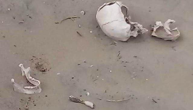 Encuentran restos óseos camino al puerto y podría ser un cementerio mapuche