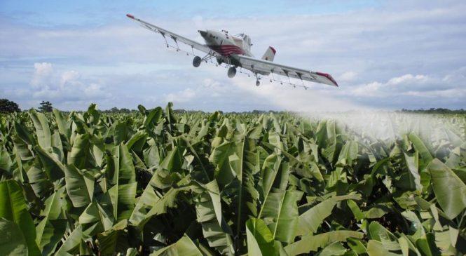 Acción global contra Monsanto: la lucha contra los agrotóxicos que nos están matando