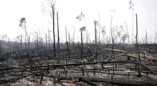 El humo del Amazonas ya estaba en Argentina