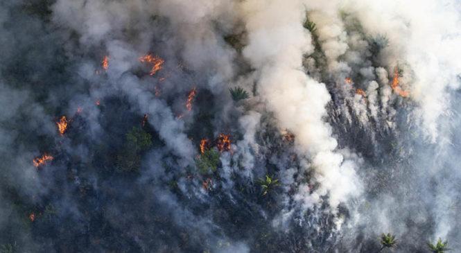 """""""Quemar la Amazonía es un crimen contra la humanidad"""""""