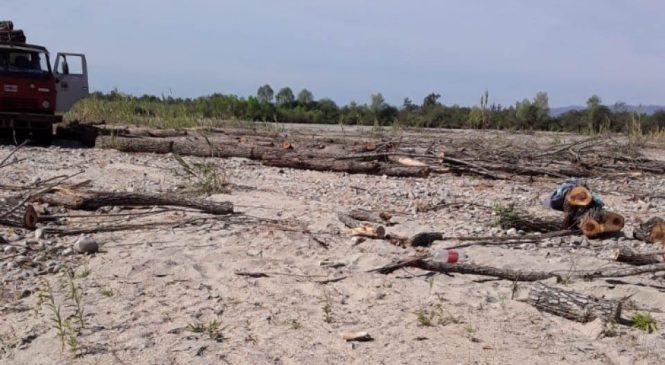 Deforestación en Orán: cortaron sauces que protegían del río a una comunidad kolla