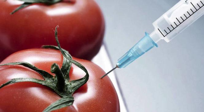 Transgénicos: en los últimos años se disparó la aprobación de semillas sin ningún control