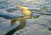 Cómo hacerse con los recursos del Ártico, ahora accesibles debido al cambio climático ¡Sin mencionar esas palabras!