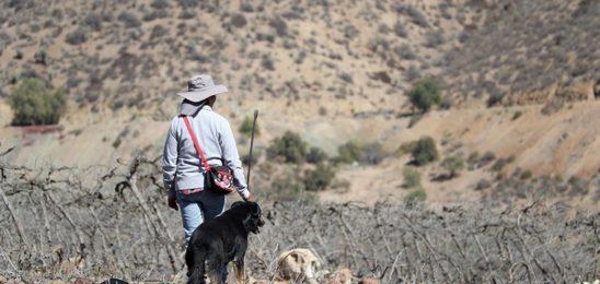 Monte Patria, Chile: Los primeros expatriados climáticos del país