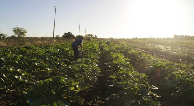 Tierras para una vida digna, producir sano y terminar con el hambre
