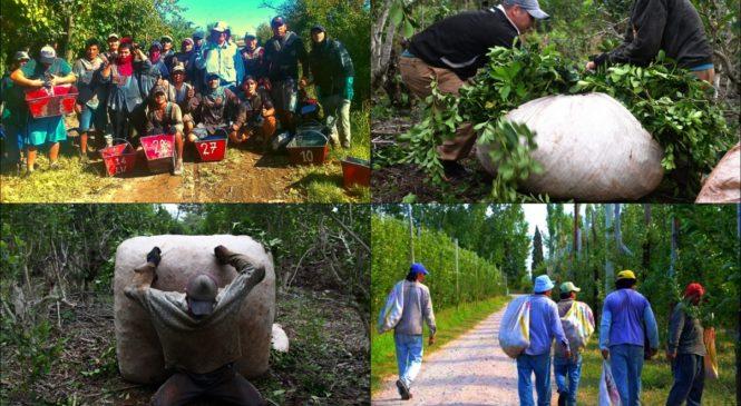 Los olvidados de la cuarentena: la situación de las y los trabajadores rurales golondrina