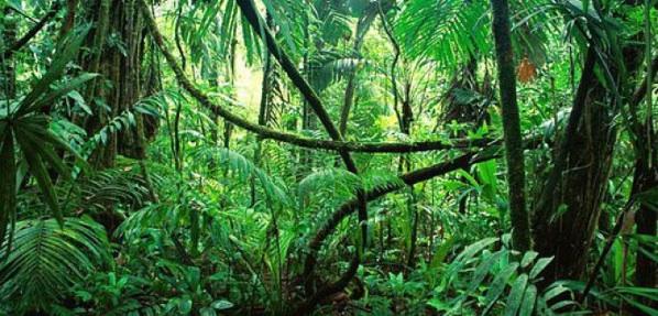 La importancia de la biodiversidad para nuestra existencia