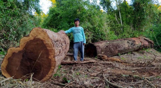 Misiones: pueblos originarios en alerta por nuevos desmontes
