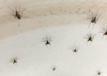 """""""La epidemia de dengue era previsible"""""""