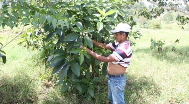 Guatemala: Queman vivo a médico maya que protegía conocimientos ancestrales