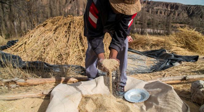 Se creó el Programa de Asistencia para la Agricultura Familiar, Campesina e Indígena