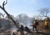 """""""Nos volvieron a prender fuego todo en las islas"""", dijo el titular de Protección Civil de Santa Fe"""