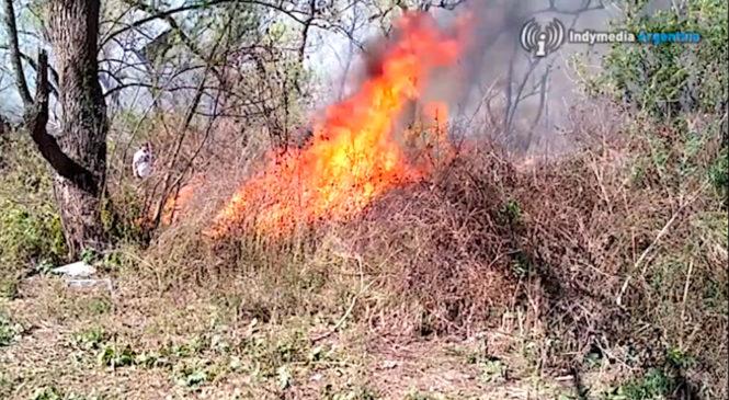 Continúan los incendios en los humedales del Paraná