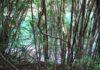 El Lawen: el derecho a la medicina Mapuche-Tehuelche