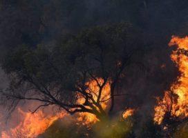 Carta abierta al Gobierno de Córdoba por los reiterados incendios