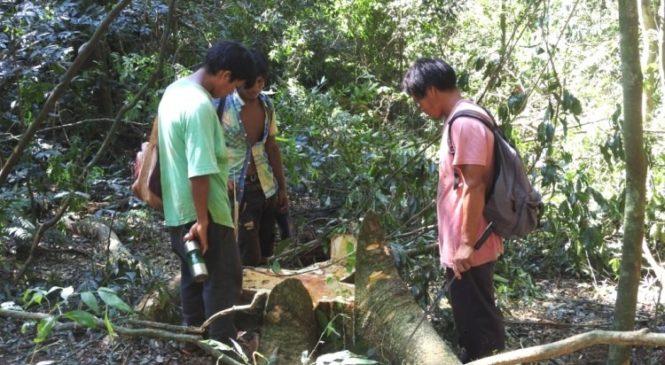 Estamos frente a un hecho histórico: Tekoa Ka'a Kupe, un escudo para la selva
