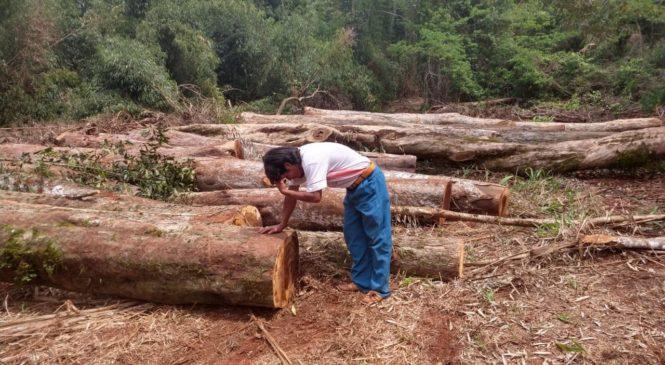Misiones: Comunidad Jaboti Mirĩ exige explicaciones sobre apelo ilegal en su territorio