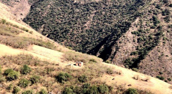 Familias kollas del Tinkunaku se refugian en los cerros para evitar contagiarse de Covid 19
