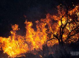 Tuitazo contra el recorte del 50% al Servicio Nacional de Manejo del Fuego en el Presupuesto 2021
