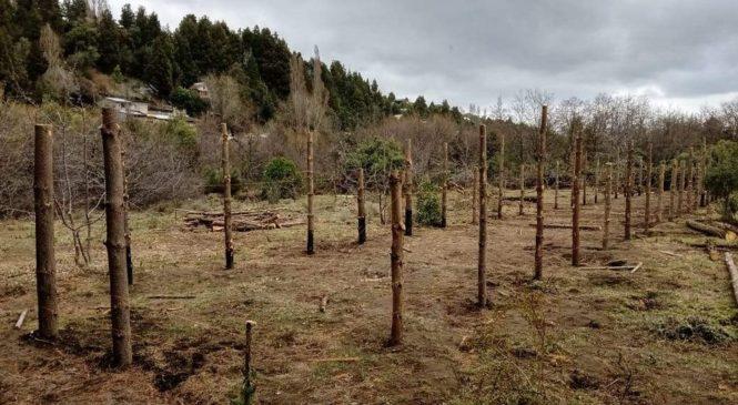 """Bariloche: la huerta comunitaria mapuche que el Ejército atacó por error está """"más fuerte que antes"""""""