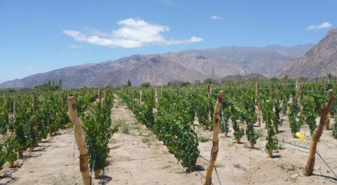 Conflictos por la tierra en Molinos: vinos de altura y derechos comunitarios