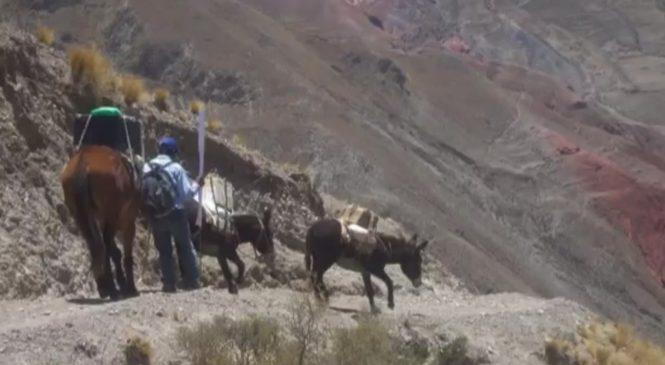 Iruya: Casa de la Cultura Awawa cumple 15 años llevando el cine en burro a comunidades indígenas