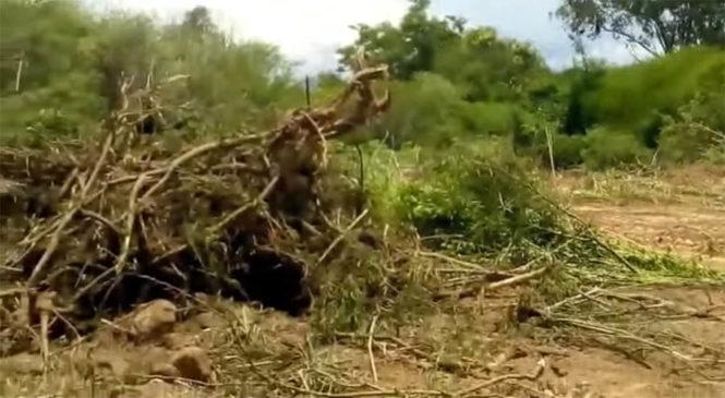 Jujuy: Desmonte ilegal contra la comunidad Tusca Pacha