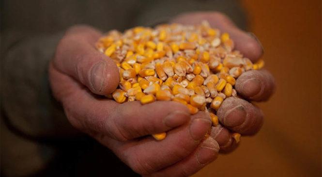 México prohíbe, vía decreto, el maíz transgénico y el glifosato