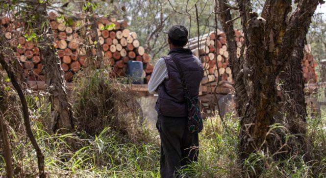 Tartagal: comunidad wichí Territorios Originarios se enfrenta a la tala del monte