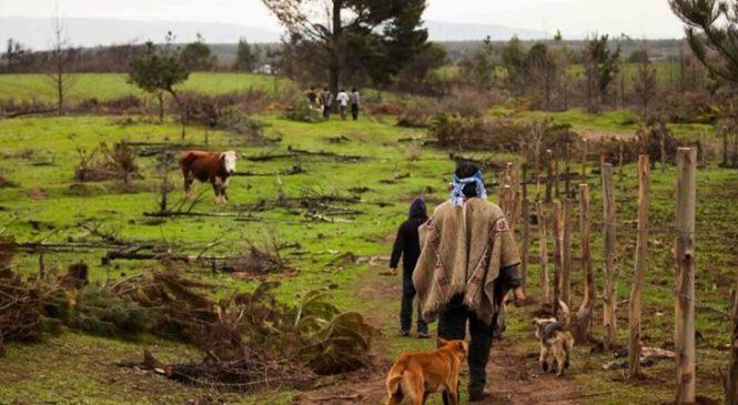 Chile: Vida rural campesina y mapuche en tiempos de crisis sanitaria