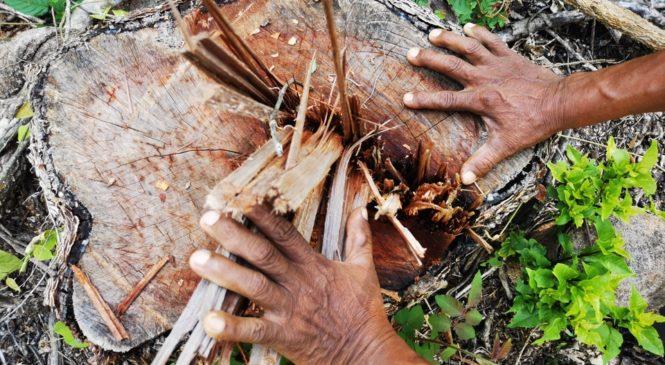 Salta: sigue la tala ilegal en tierras originarias pese una cautelar que la prohíbe