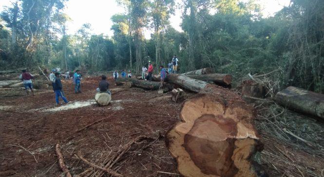 Misiones: Comunidades Mbya Guaraní exigen el cese del desmonte en Tekoa Ka'a Kupe