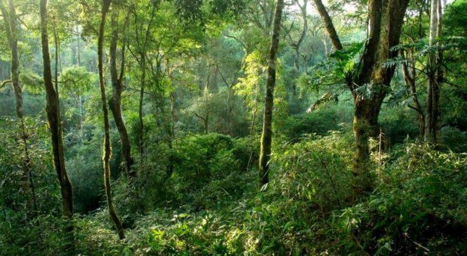 Los guardianes del bosque, fundamentales contra el cambio climático