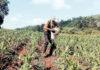 Colectivo Agricultura Integral: una apuesta por la soberanía alimentaria y el derecho a la tierra