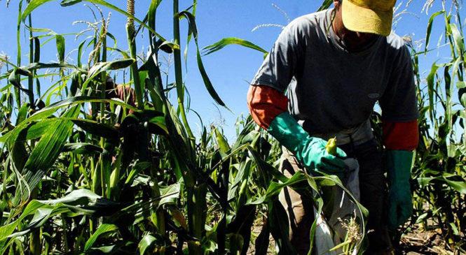 Una tasa municipal promueve la transición agroecológica en la localidad santafesina de Zavalla