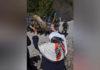 Represión y desalojo a la comunidad mapuche lof Quemquemtrew: Testimonio