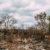 Empresas y bancos europeos participan en la destrucción de bosques y sabanas de Brasil
